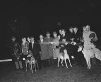Three winning Kerry Greyhounds