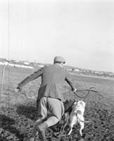 Coursing in Listowel
