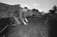 Tralee Town Park Gardener Pat Wynne