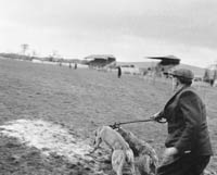 29th December 1964; The Kingdom Cup coursing meeting in Ballybeggan Park, Tralee.