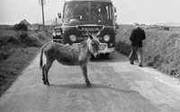 1953; A Photo Of A Donkey Standing In Front Of A Bus Tour On Valentia Island.