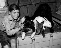 A Boy With Animals
