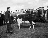 A Photo of a Farm Visit