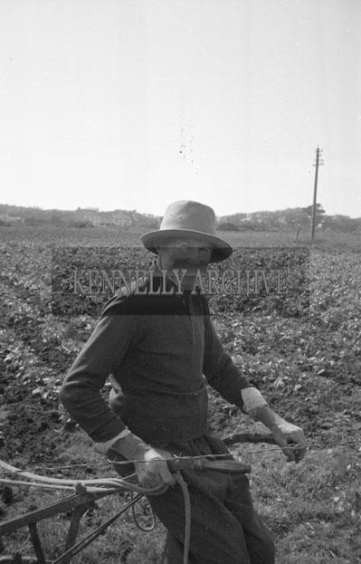 1953; A Farmer Working On His Land On Valentia Island.