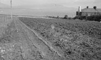 1953; Farmland On Valentia Island.
