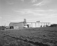 July 1964; Frozen Salmon at Renard Fish storing plant in Caherciveen.