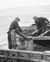 Mussel Fishing in Cromane